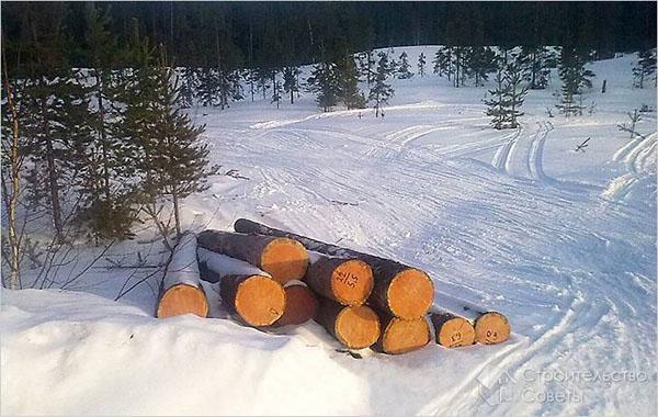 При самостоятельной заготовке древесины