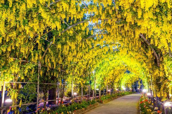 Глициния лоза туннель сад пейзаж идеи сад путь.