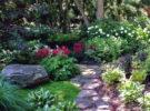 Как создать интересный дизайн тенистого сада — правильно выбираем растения?