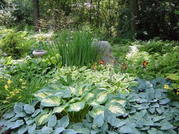 ь растения в зависимости от типа тени: