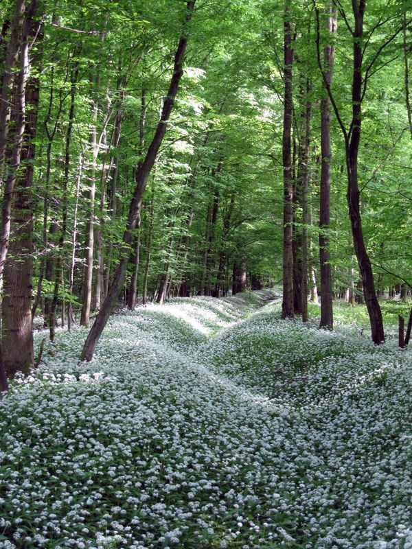 Заземляющие растения