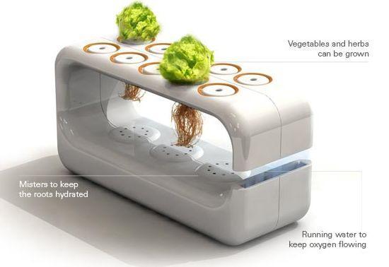 Гидропонный сад, идеи для дома.