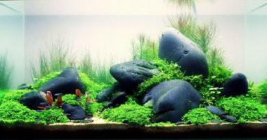 Растения для аквариума, первые шаги аквоскайпинга