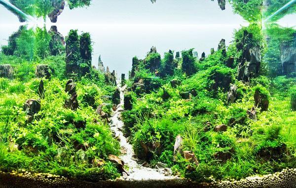 Подземные растения для аквариума.