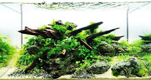 Растения, растущие на дереве в аквариуме
