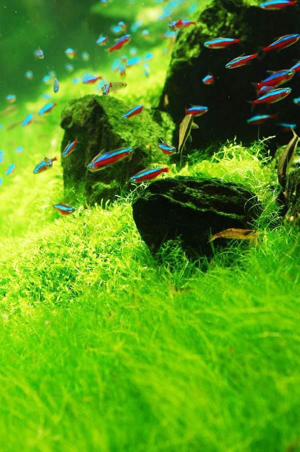 Что нужно знать при выборе растений для аквариума.