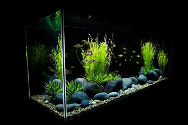 Типы растения для акваскейпинга