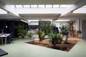 Дизайн сада в доме — идеи и выбор растений для них.