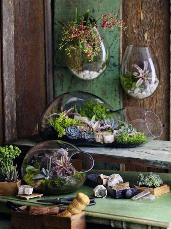 мини-сады и террариумы