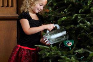 Как выбрать живую новогоднюю елку и сохранить ее свежей на длительное время.
