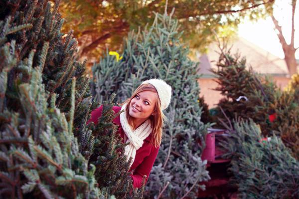 Живая новогодняя елка как выбрать
