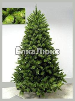 Норвежская ель (Picea abies).