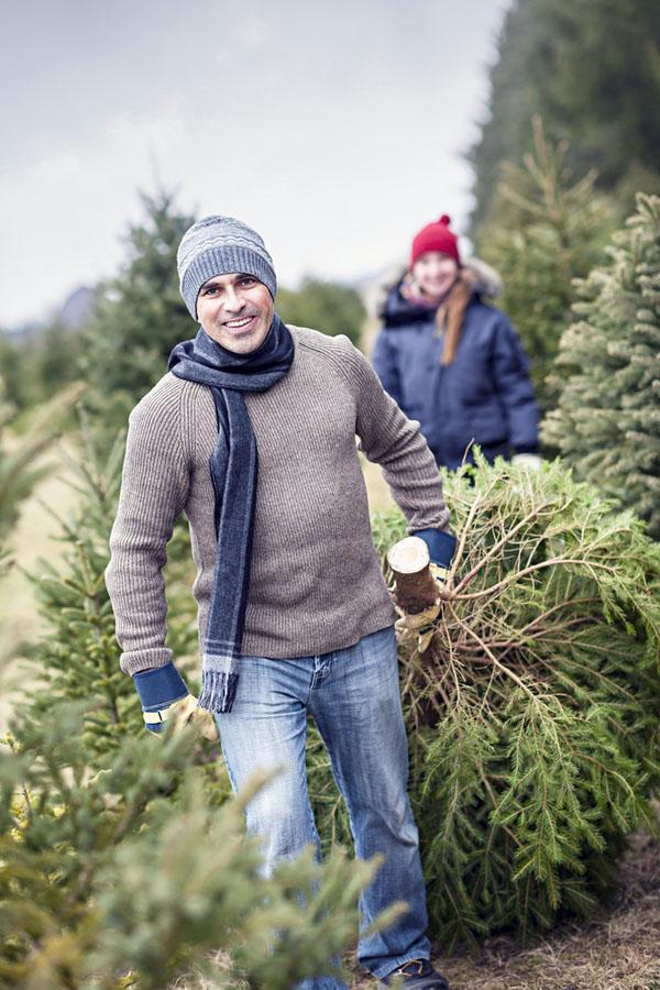 Форма Живая новогодняя елка