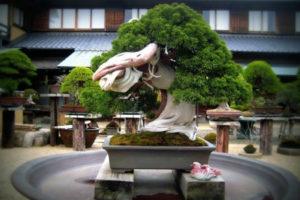 Сад Бонсай — почувствуйте очарование в миниатюрном дизайне.