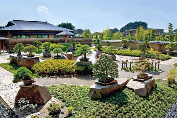 деревья декоративные камни дизайн сада идеи дзен.