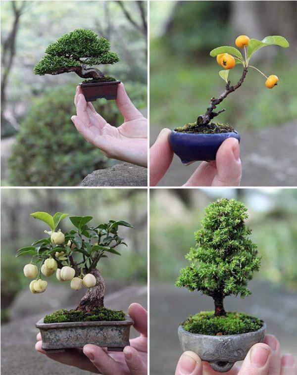 деревья бонсай миниатюрные конструкции, делаем маленький сад.