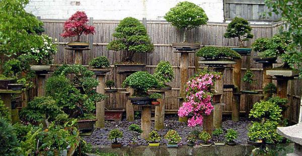 маленький дизайн сада в азиатском стиле.