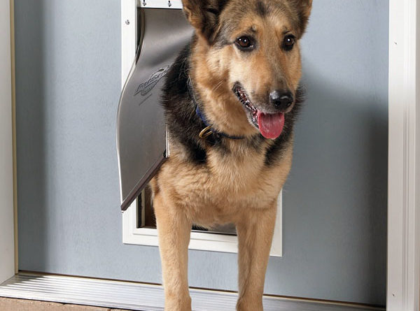 Двери для собак, варианты, как выбрать