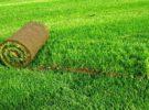 Преимущество газонов