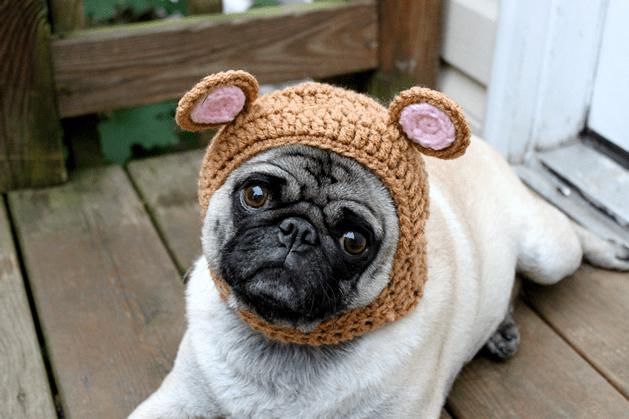 Мопс и вязаные шапочки