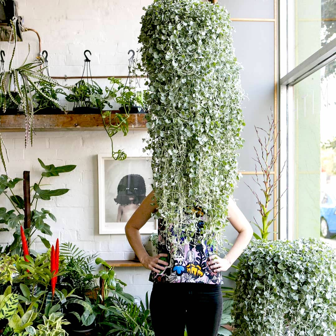 15 Лучших вариантов вьющихся и ампельных комнатных растений
