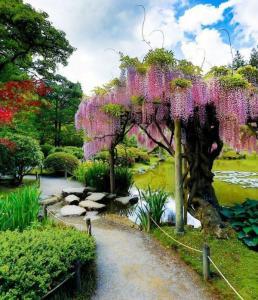 Розовое дерево глицинии японские садовые растения японский сад