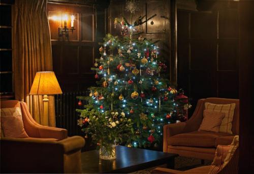Как сохранить живую елку после нового года.