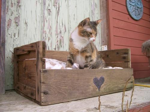 Спальник для кота
