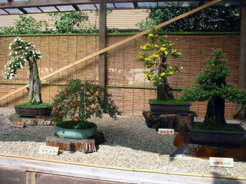 японский садовый бонсай бамбуковый забор
