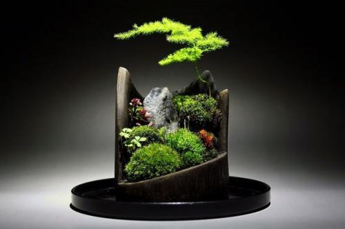 Японская ветка бонсай