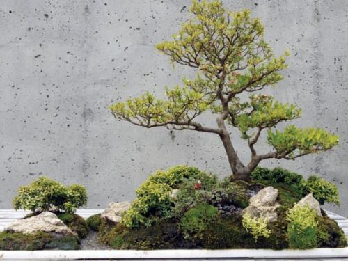 идеи дизайна деревьев бонсай